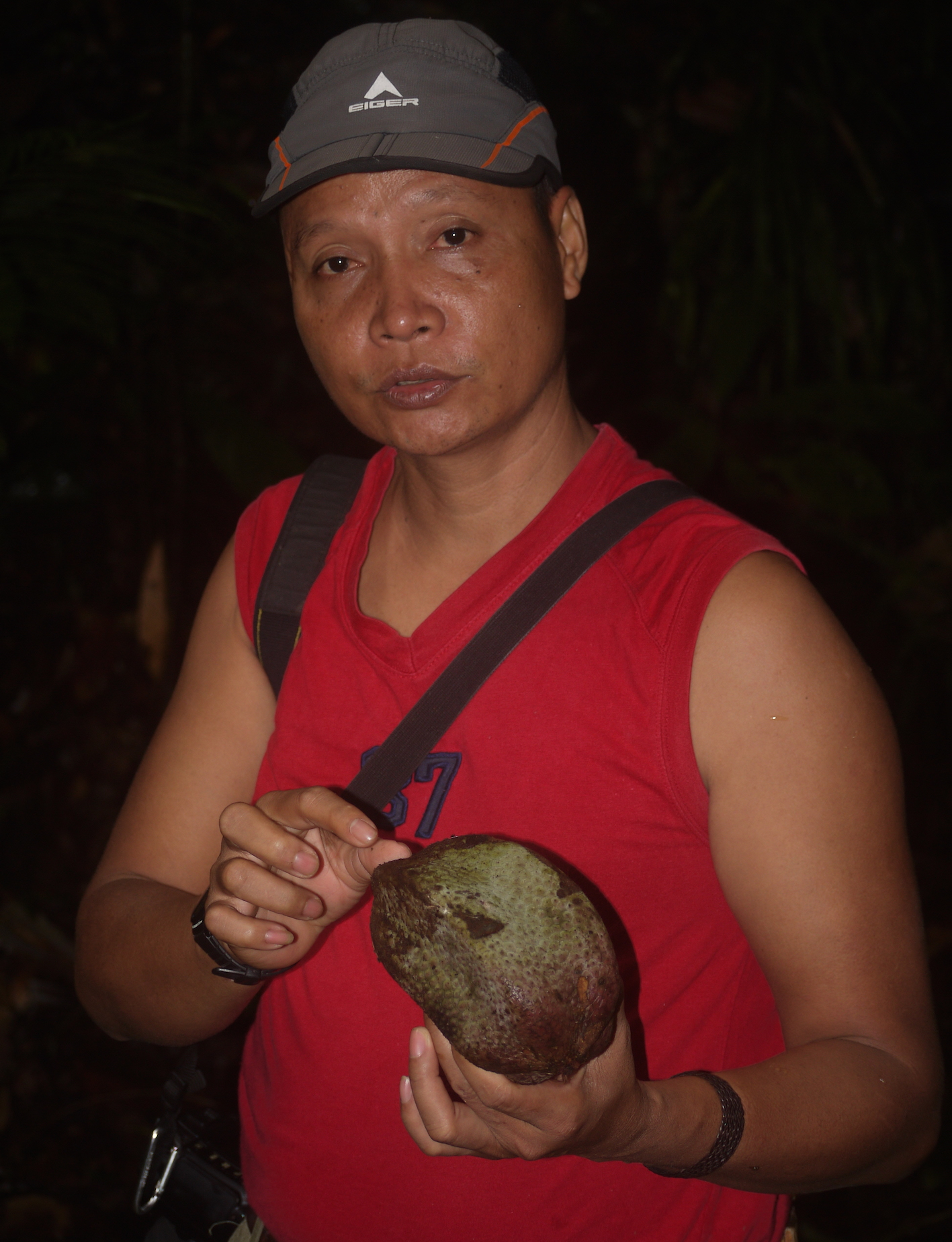 Suprayudi describes a favorite food of orangutans -- a rainforest fruit whose seeds they disperse  (photo by William Laurance)