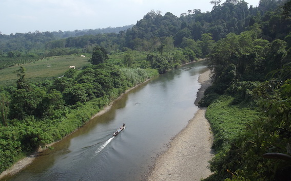 Each year farms, tracks, and roads encroach further into the Leuser Ecosystem -- conservationists are trying to staunch the forest loss  (photo (c) Suprayudi)