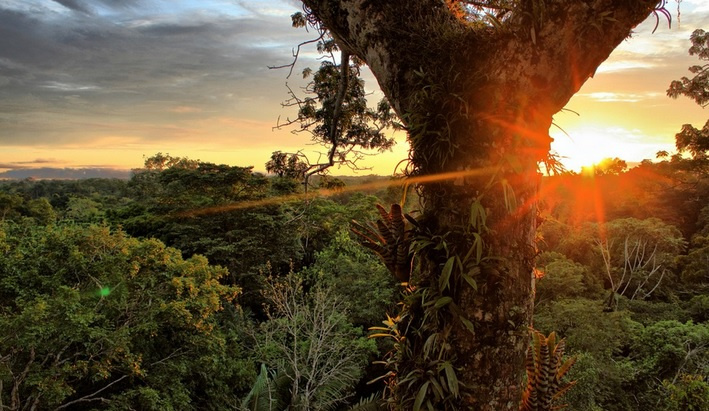 In megadiversity nations, conservation can't wait -- Yasuni National Park in Ecuador.