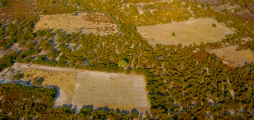 Woodland clearing in the Okavango Delta of Botswana.