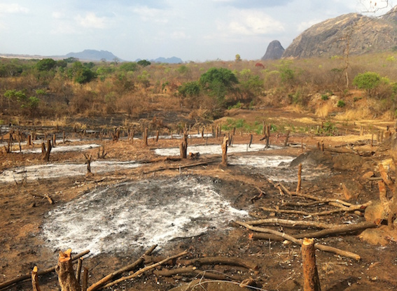 Habitat destruction in Mozambique  (photo (c) James Allen)
