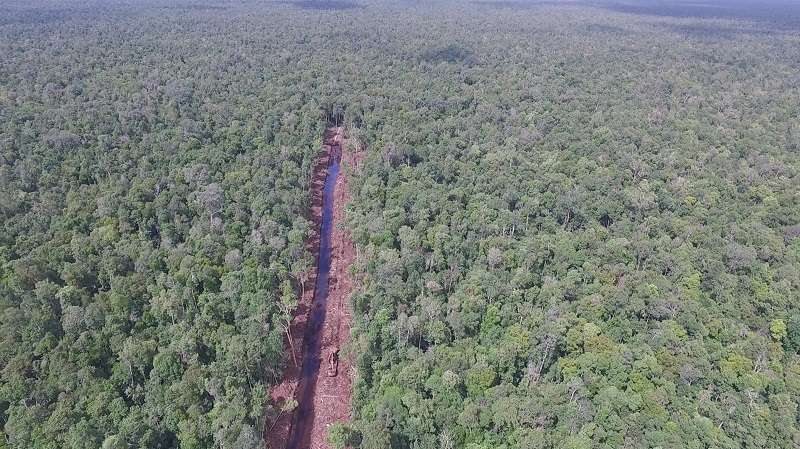 The major canal cutting through the Sungai Putri peat swamp was 8 kilometers in length a month ago  (photo (c) International Animal Rescue).