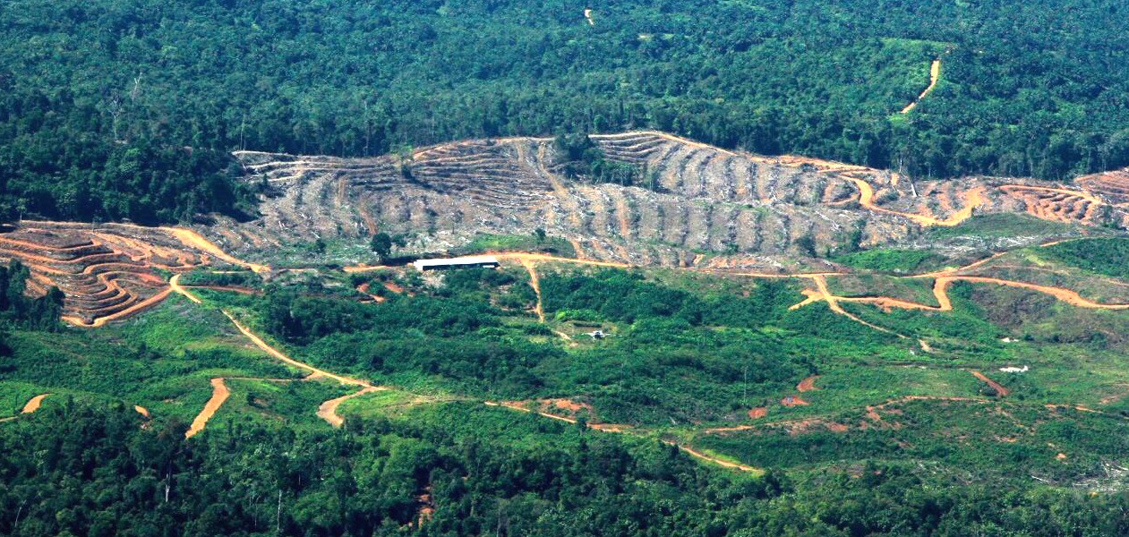 Ongoing deforestation in the Leuser Ecosystem