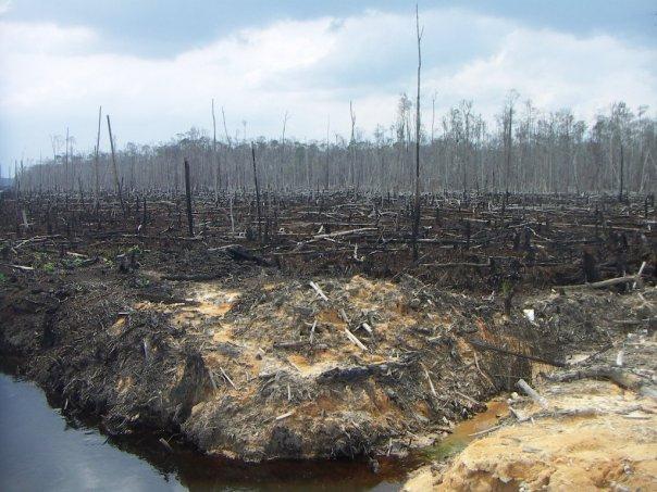 deforest.jpg