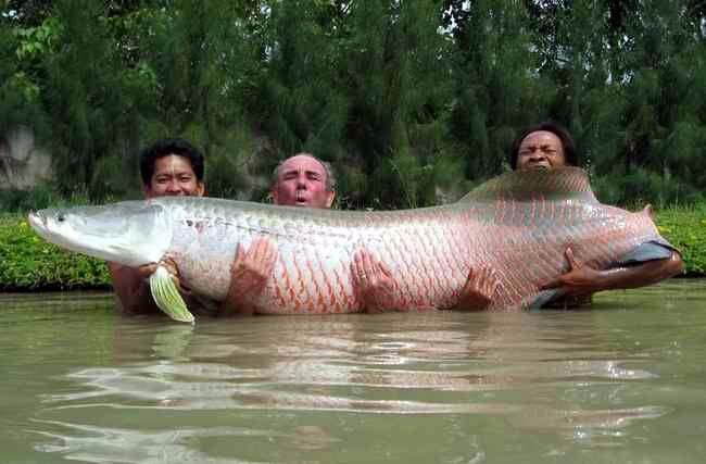 fish-big.jpg