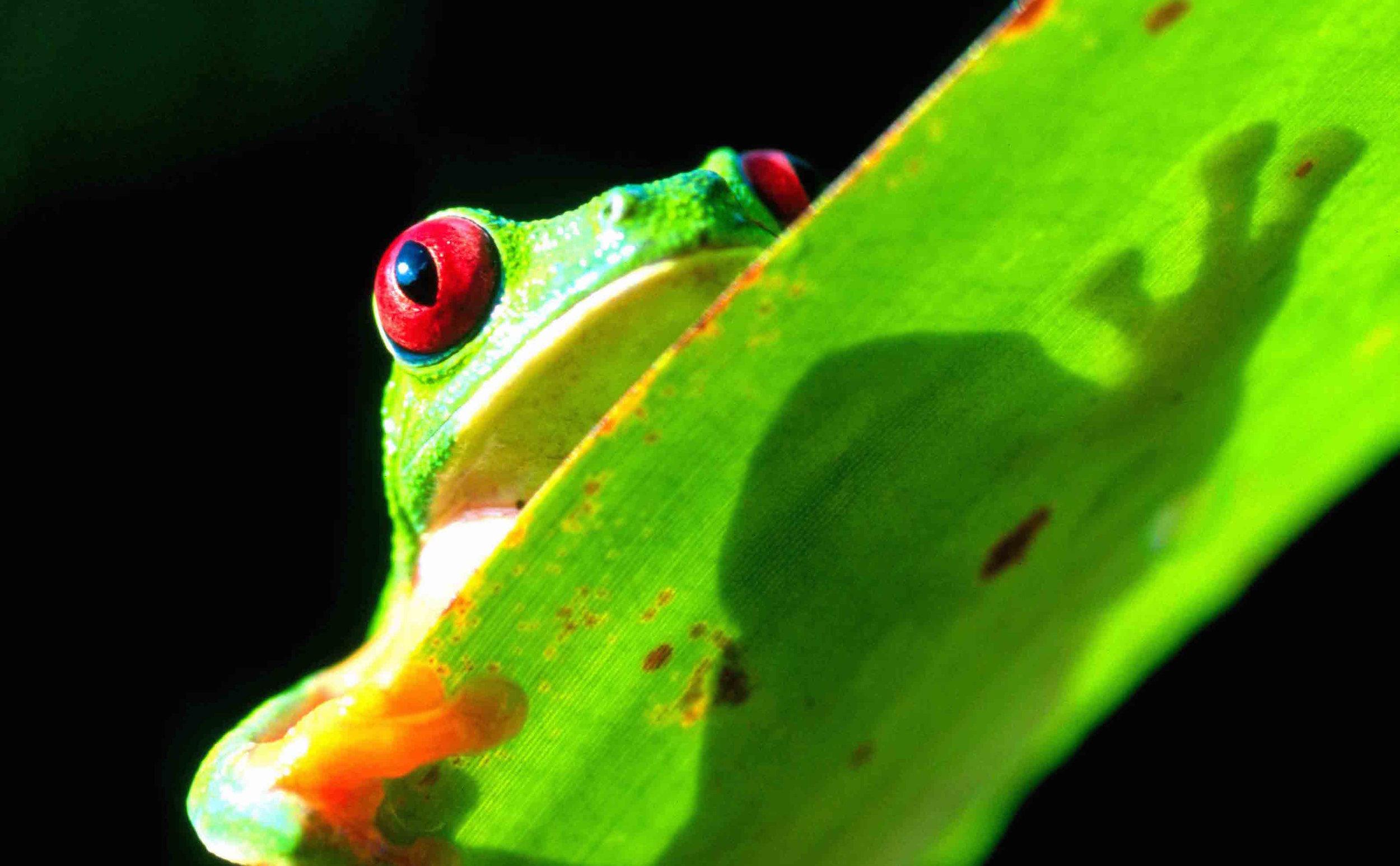 BCI-treefrog.jpg
