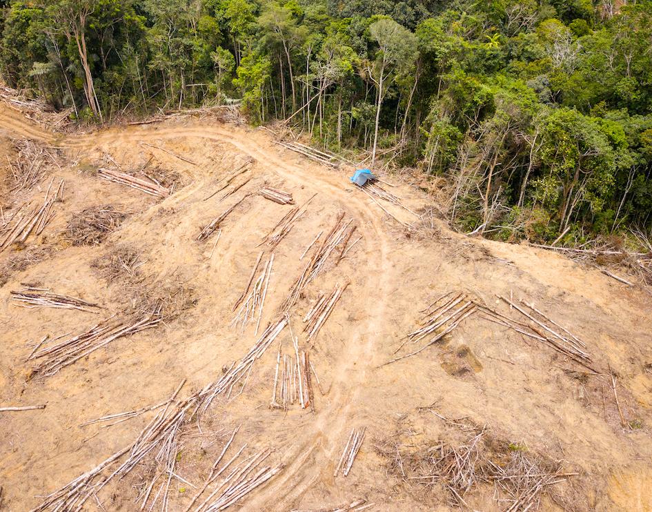 Sumatran Orangutan Society-clearing.jpg