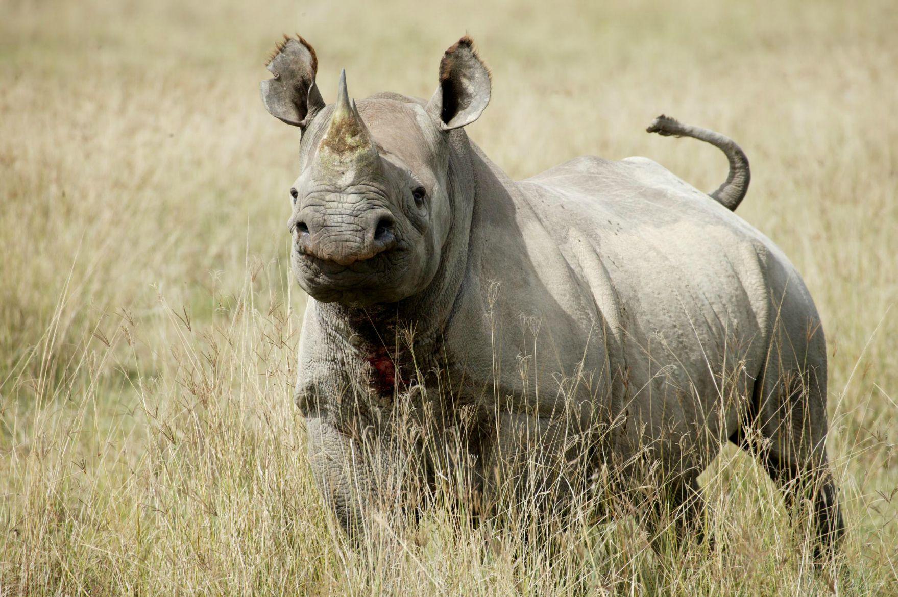 Black-Rhino.jpg
