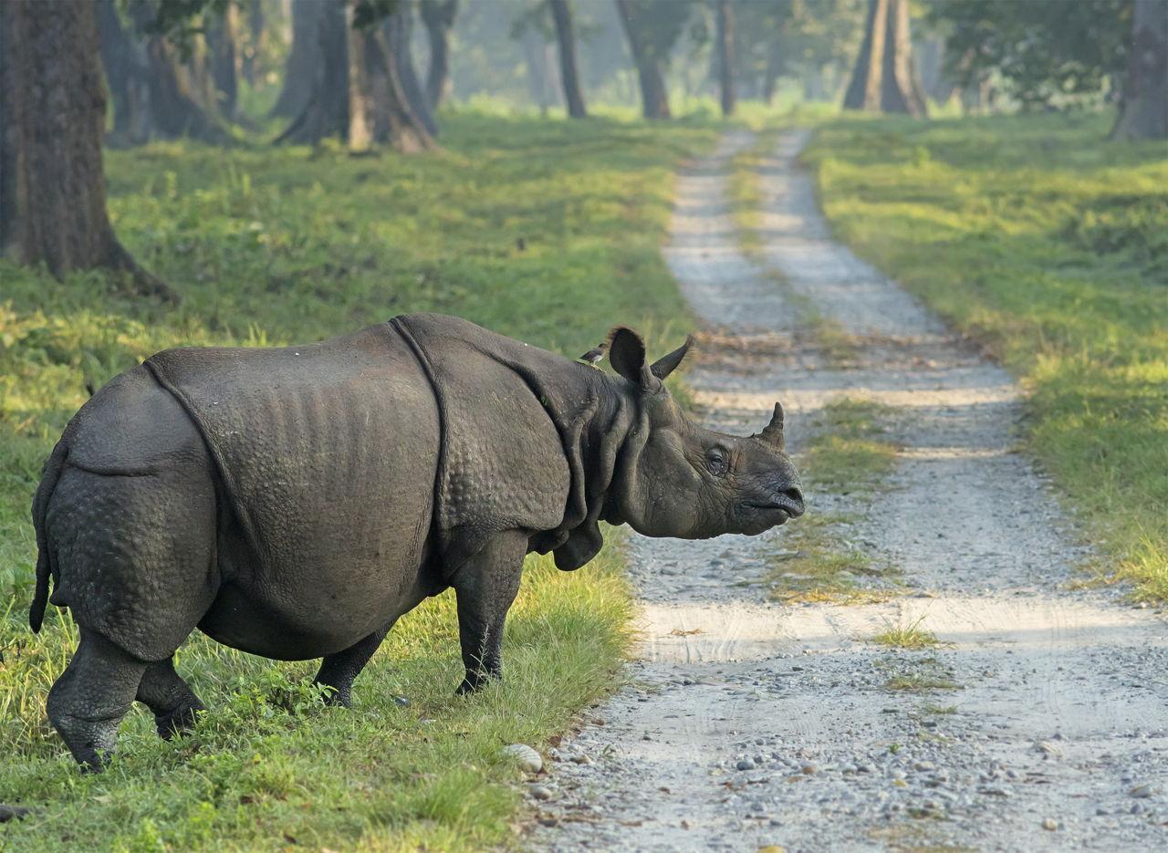 Javan-rhino-road.jpg