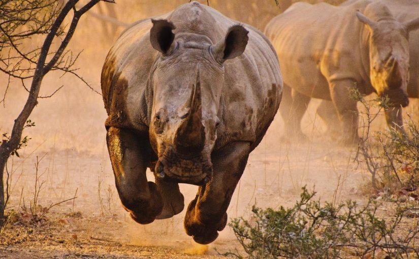 Rhino-Mozambique.jpg