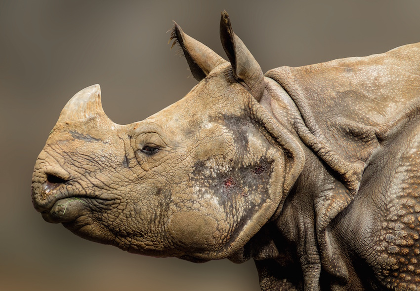 rhino-936288-Pixabay-free.jpg