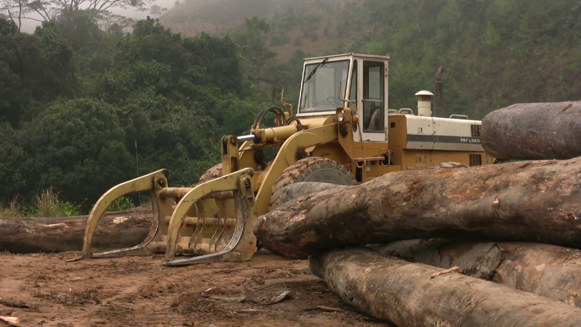 rainforest-logging-industry-deforestation-jungle-forest-tropical-logs-vietnam_htr4rl2x__F0010.png