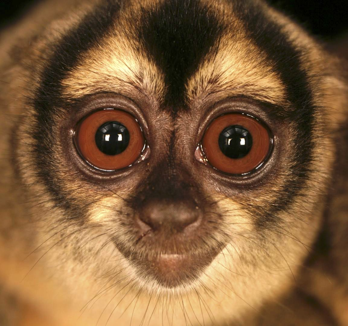 Night-monkey-cropped.jpg