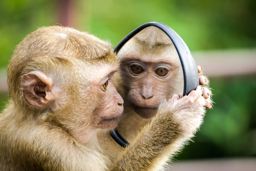 Monkey-mirror.jpeg