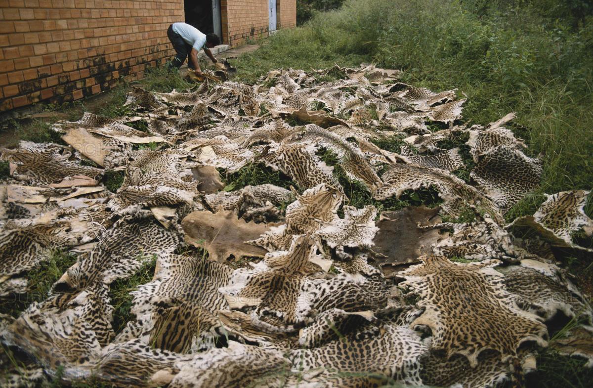 jaguar-skins.jpg