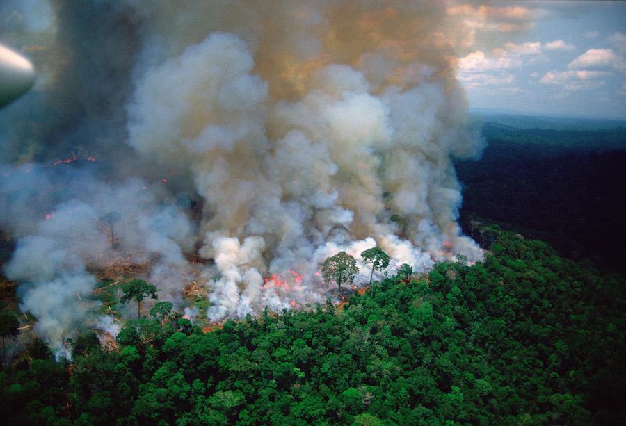 Amazon-rain-forest-afire.jpg