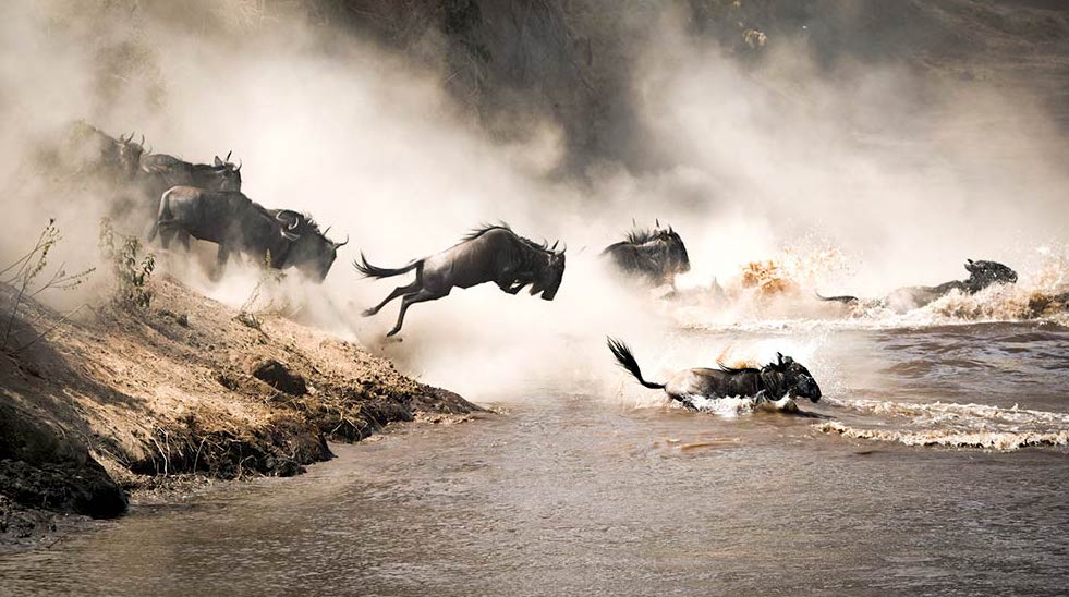 wildebeest-migration-jummping-on-mara-rive.jpeg