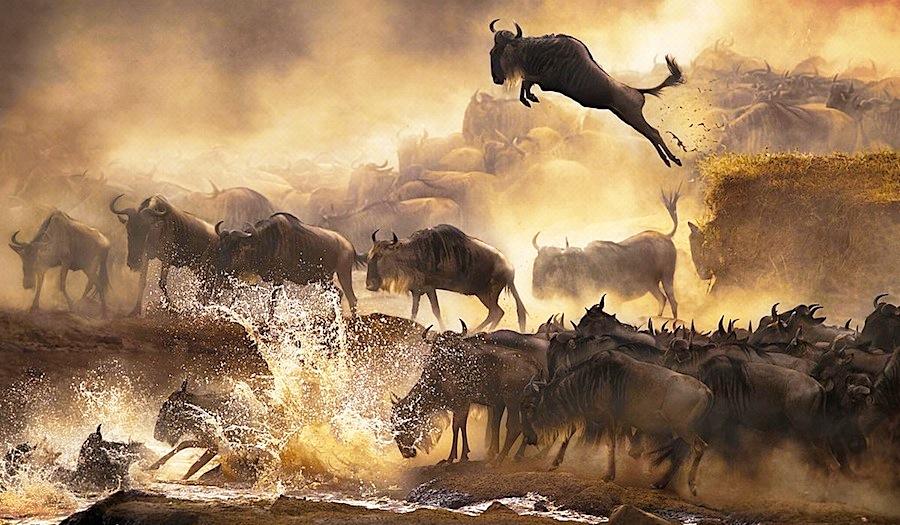 wildebeest-migration-serengeti-masai-mara.jpg