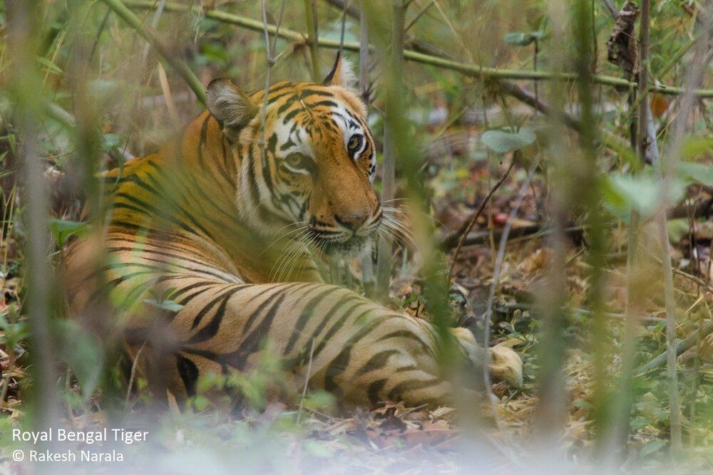 Rakesh Narala photo.jpg