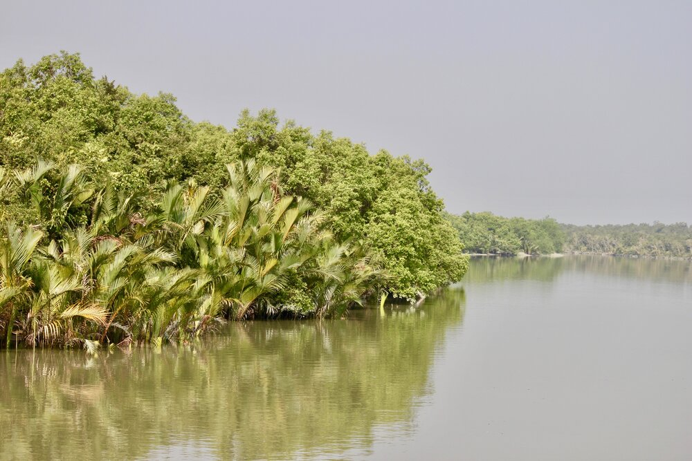 Water & Nypa palms_Sharif A. Mukul.jpg