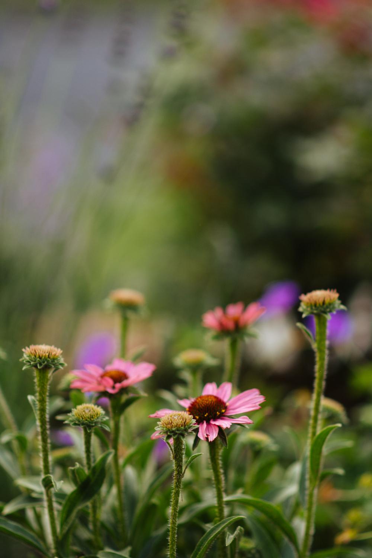 150609_garden_004.jpg