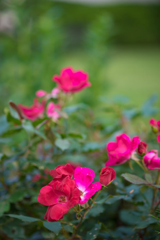 150609_garden_005.jpg