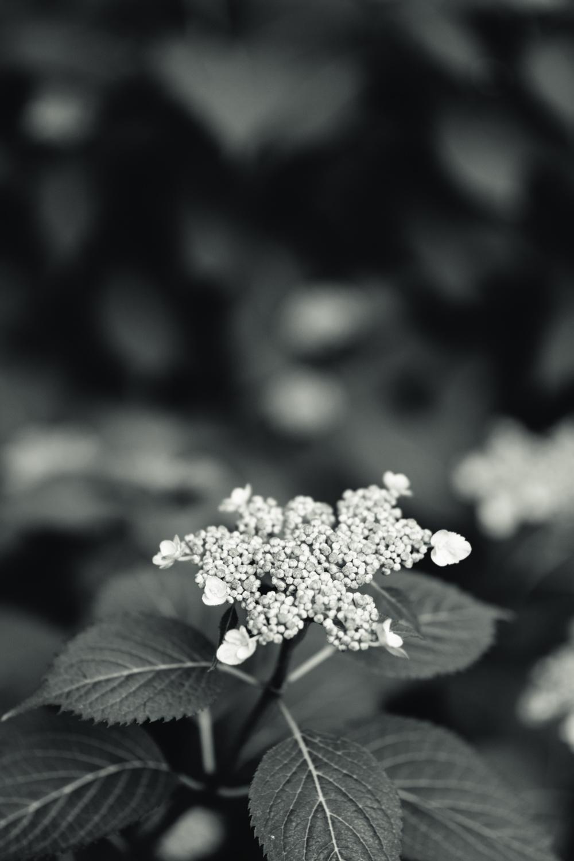 150609_garden_006.jpg