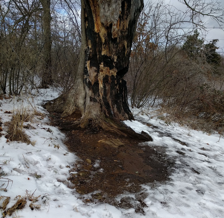 devils-tree-snow-edit.jpg