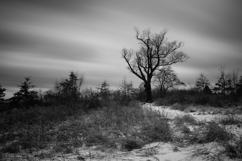 Devil's Tree - NJ