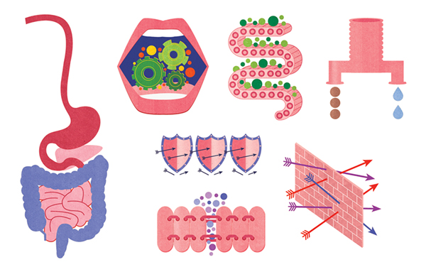 Project:   Anatomy of a leaky gut syndrome.   Client:   Experience Life Magazine, 2014