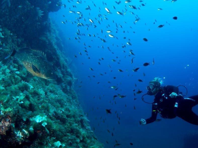 MajorcaYoga-beach-holidays-Majorca-Activities2018-14-Diving.jpg