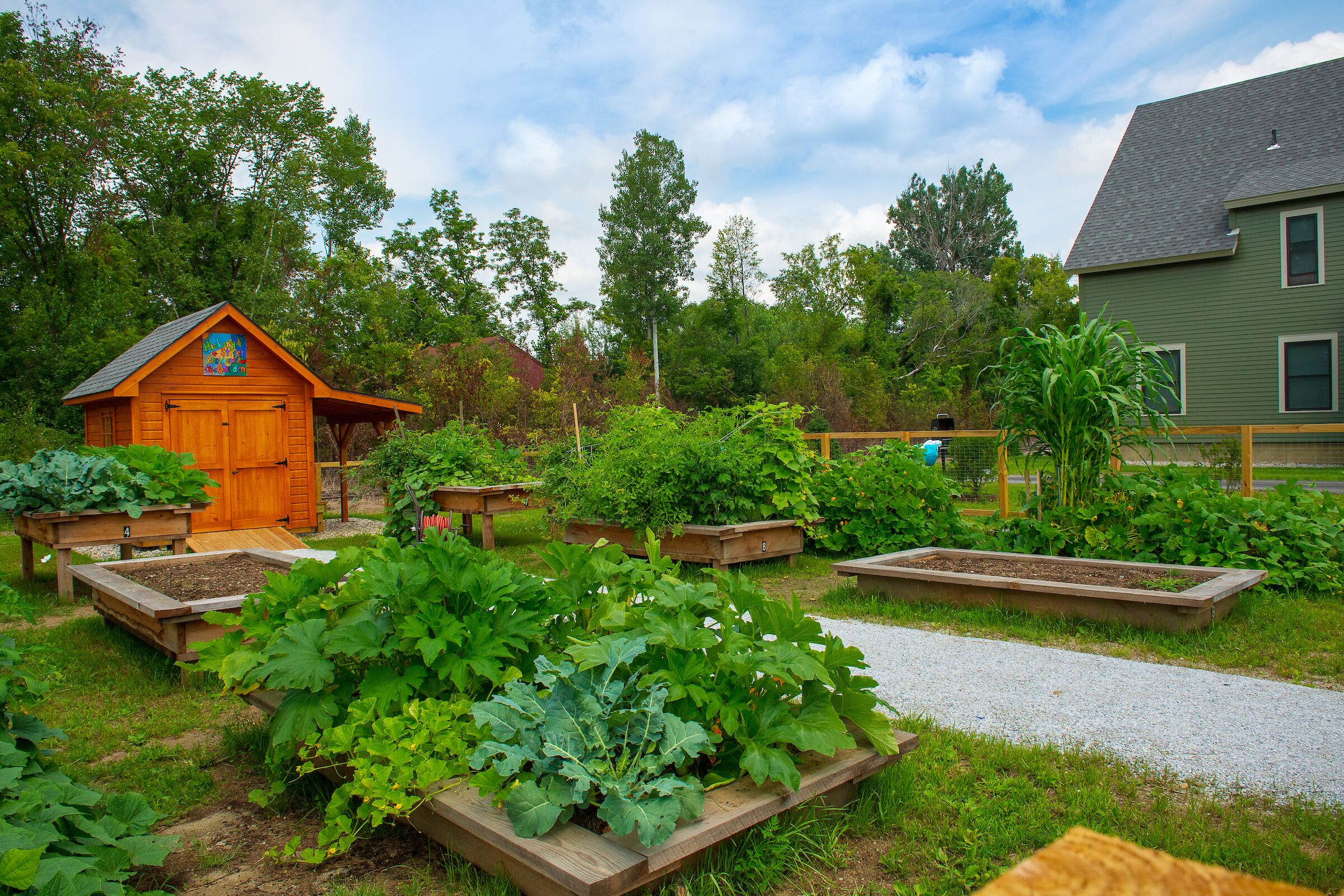 A COMMUNITY GARDEN IN RUTLAND'S HICKORY STREET NEIGHBORHOOD. THANKS TO THE PARSONS PLATFORM'S DATA MONITORING, HOUSING VERMONT IS ABLE TO REDIRECT SAVINGS FROM EQUIPMENT AND FUEL COSTS TO RESOURCES, LIKE THIS GARDEN, THAT IMPROVE THE LIVES OF RESIDENTS. PHOTO COURTESY OF SALLY MCCAY.