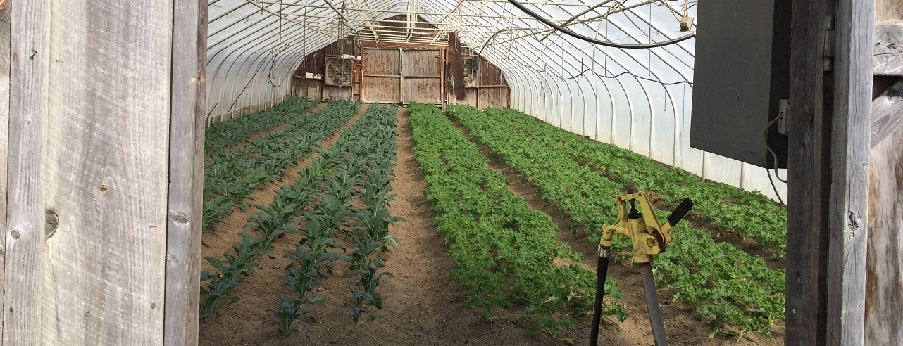 A greenhouse at harlow farm in westminster, vermont.