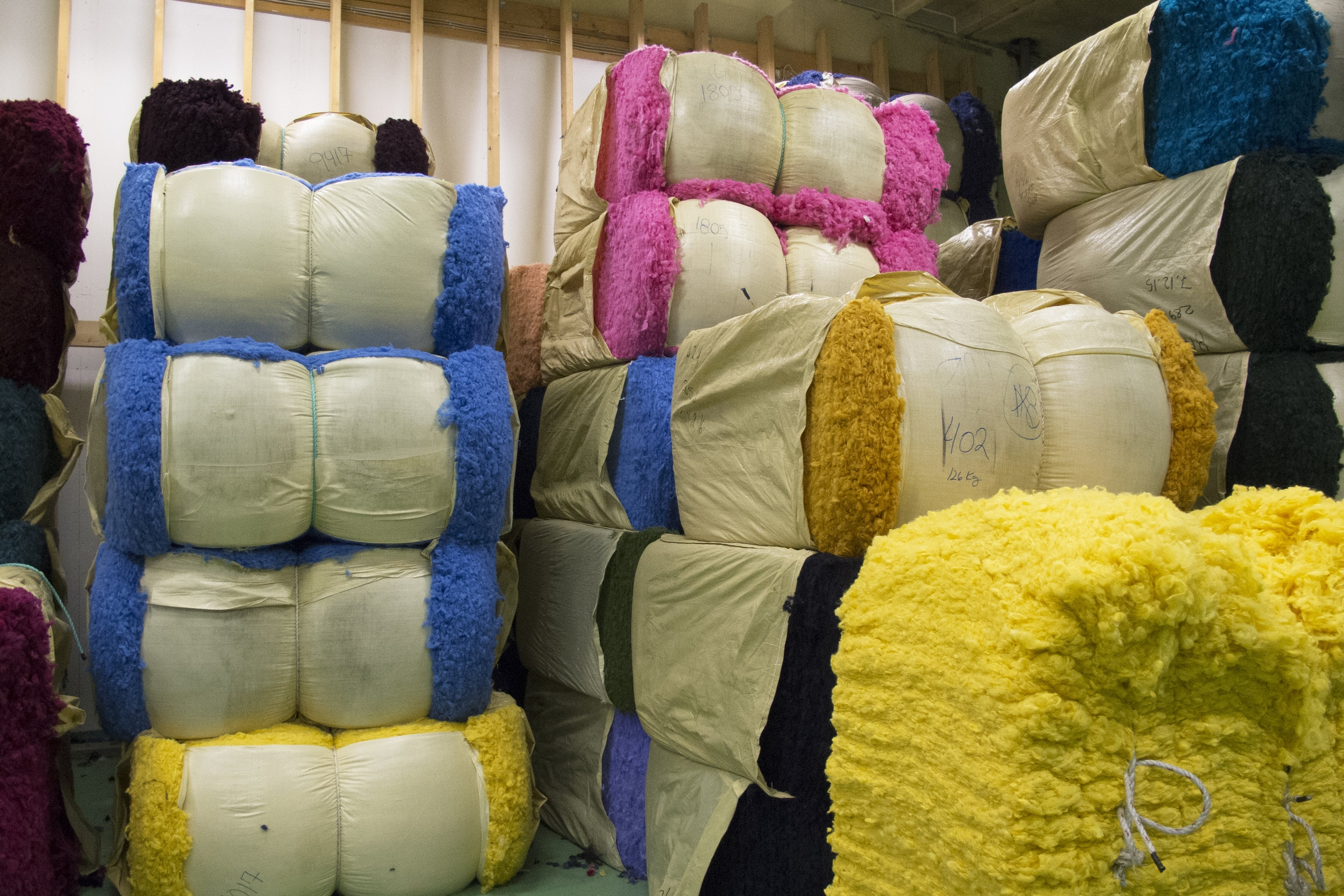 Dyed fleece ready for carding and spinning