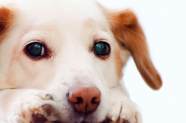 dog-1364030758TGt.jpg