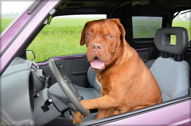 My paws are a bit big for turns. Im so glad you know to drive for us both! Thank you for helping me find my home!   ~Doggie