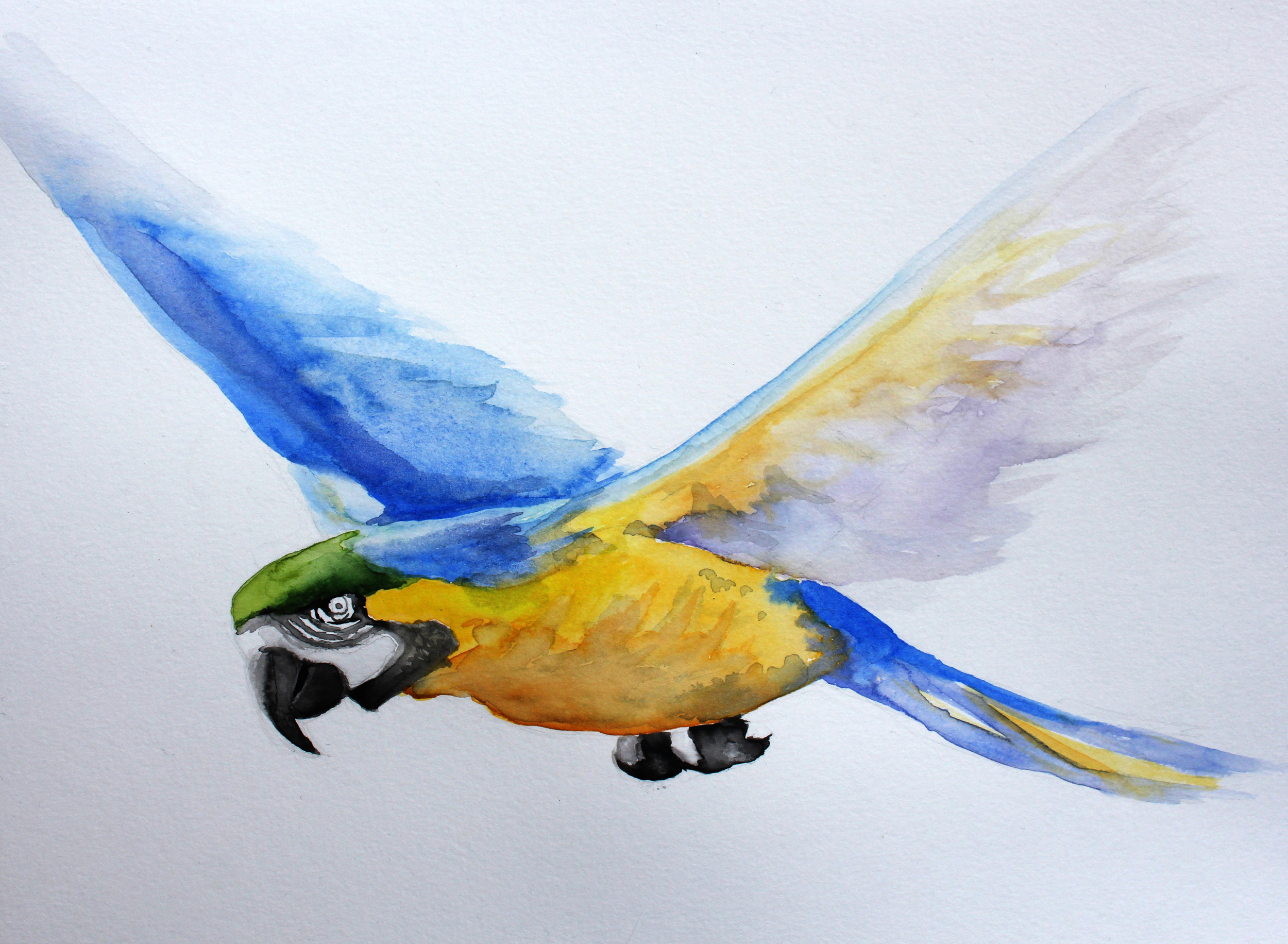 Parrot In Flight