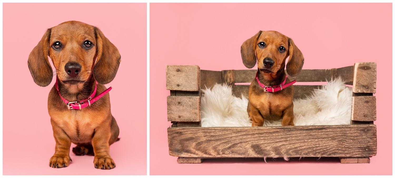Pet Photography, Scotland, Mutley's Snaps_0002.jpg
