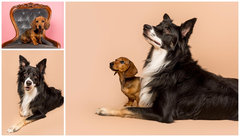 Pet Photography, Scotland, Mutley's Snaps_0007.jpg