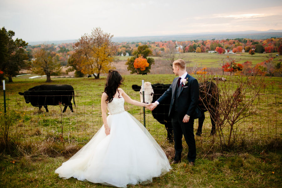 bride and groom with cow