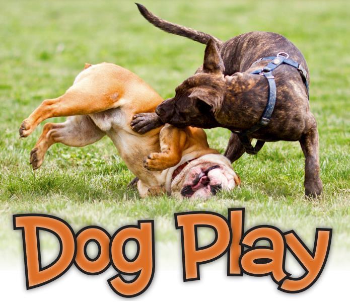 dog-play-seminar.jpg