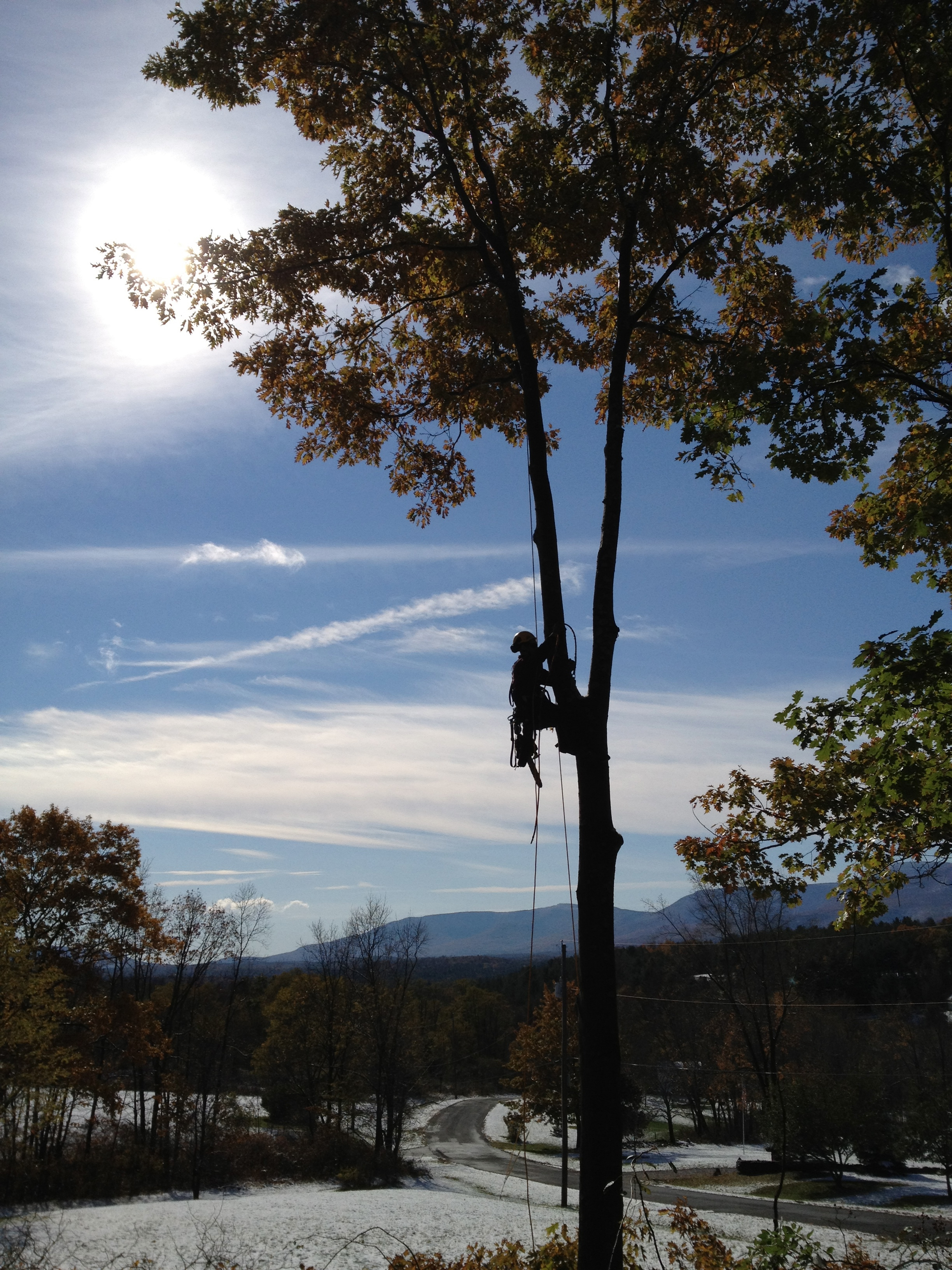 Certified arborist Caleb White performs vista pruning to improve a beautiful view of the Catskills.