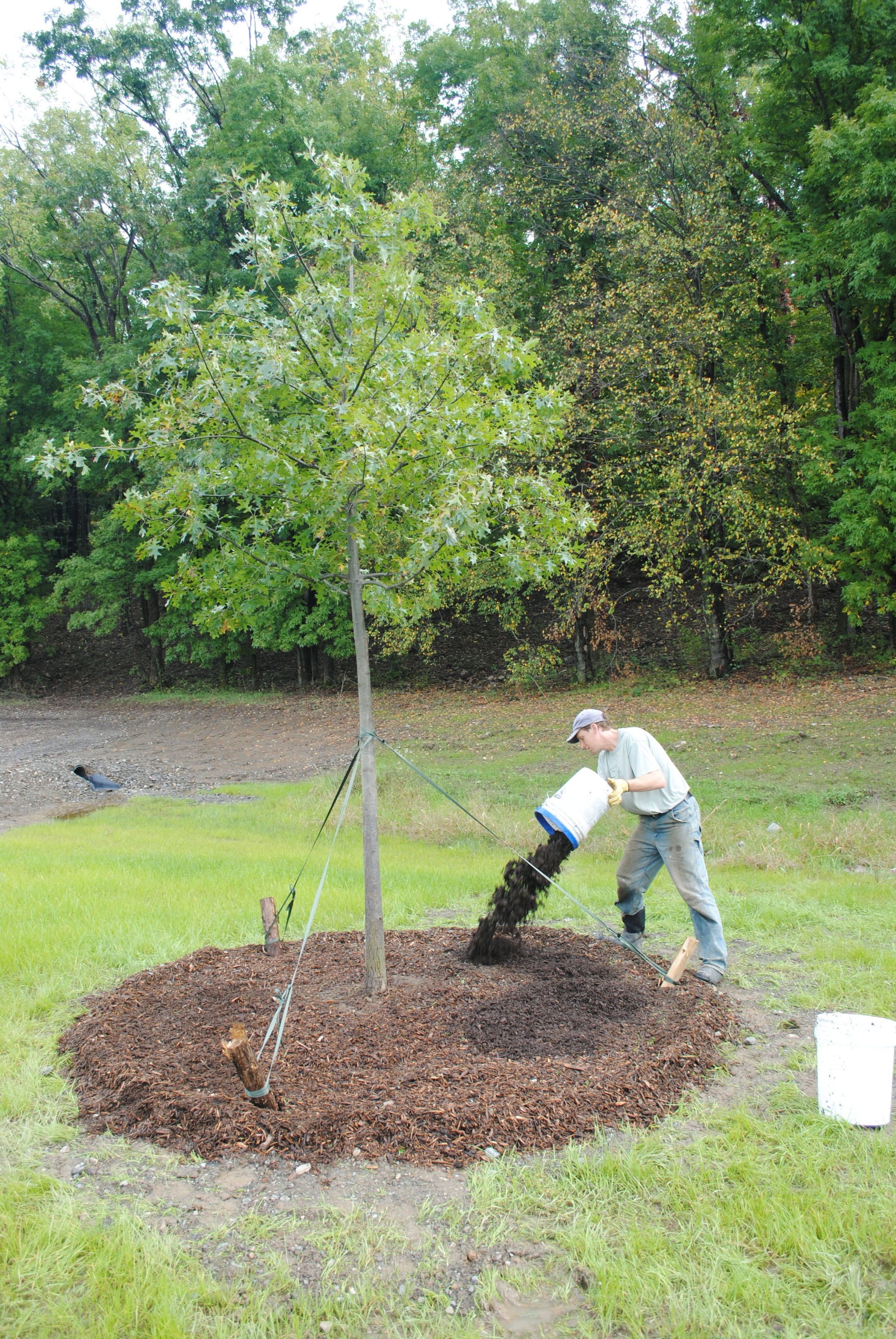 Tree & Shrub Planting