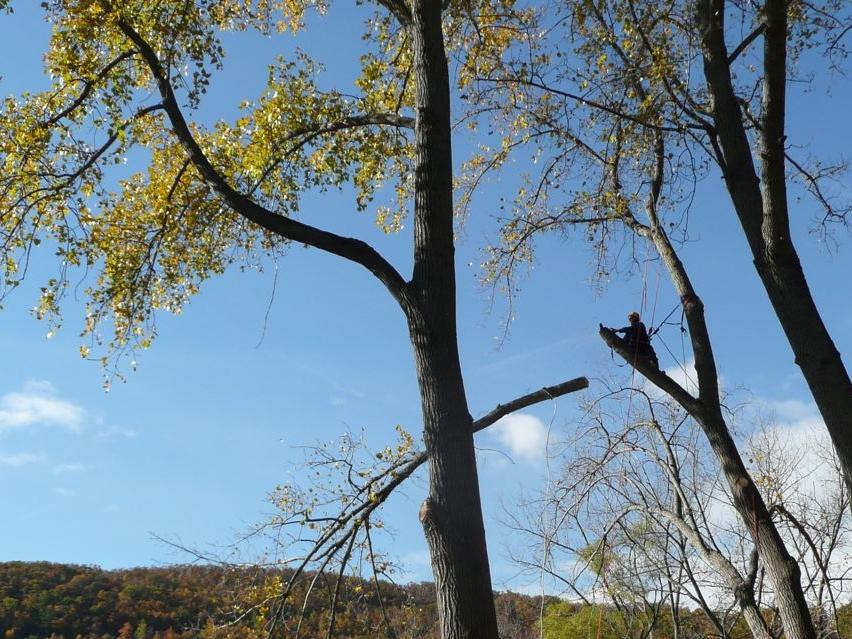 tree-service-testimonials