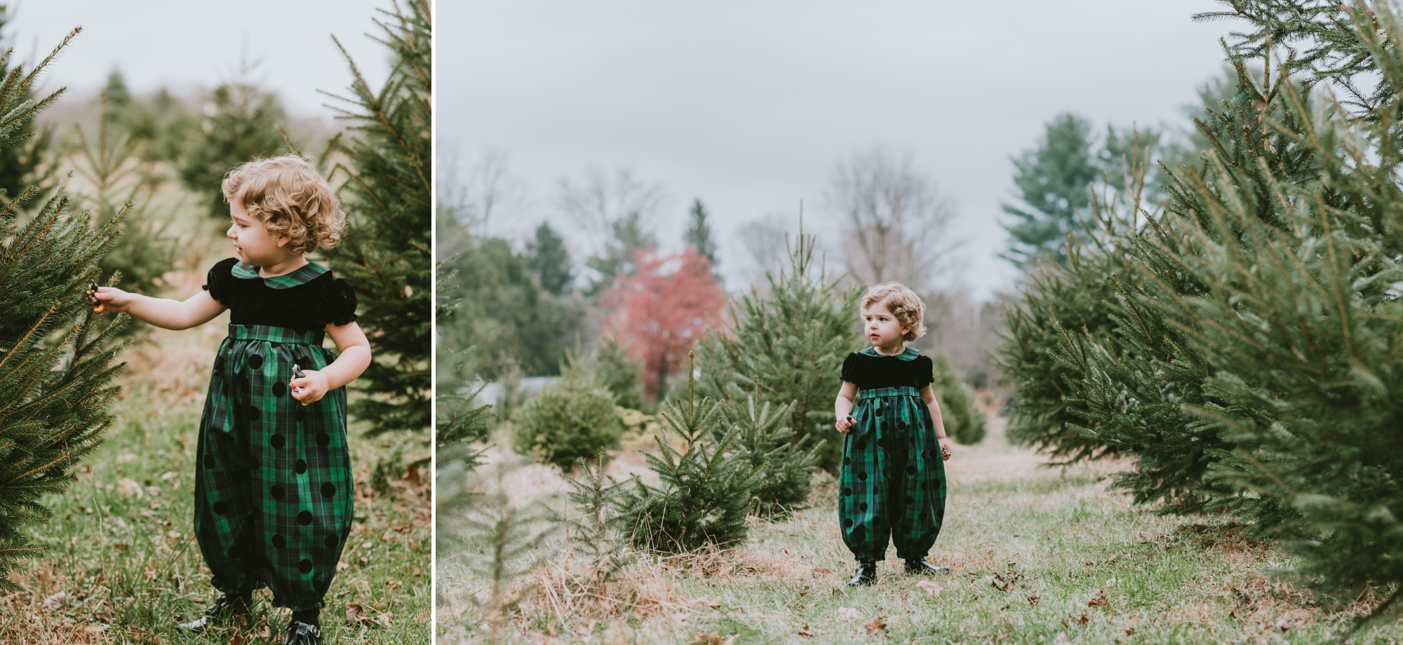 Christmas Mini Photography Session Conover's Farm, Wall New Jersey