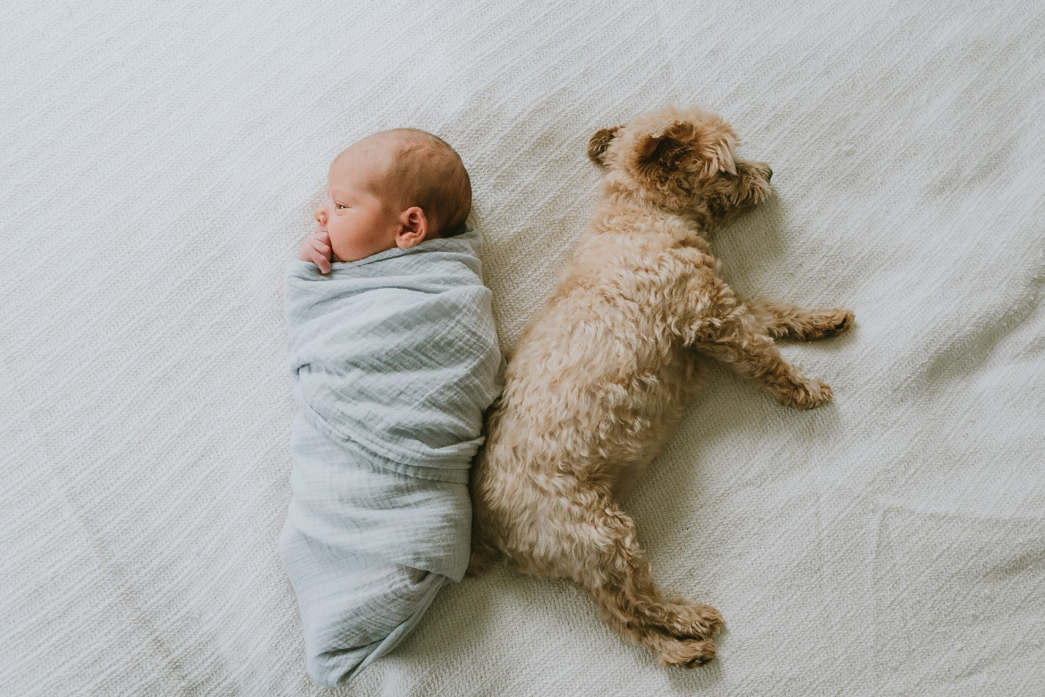 Newborn Baby Boy and Dog Monmouth County New Jersey