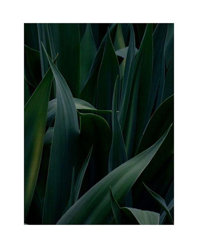 Photograph by Fabrizio Raschetti  #photography #art #light #styling #flora #shadow #moody #calm #fellsandes