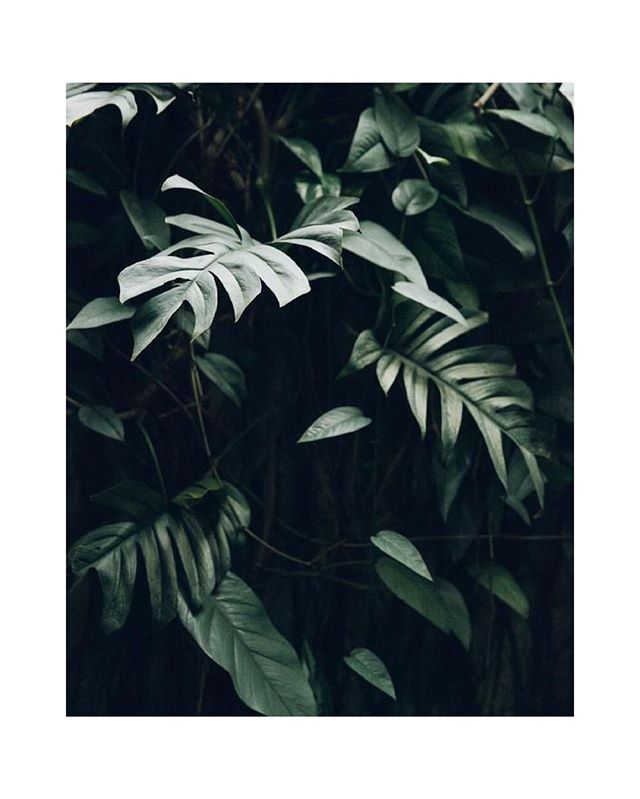 Fabrizio Raschetti Photography.⁠ ⁠ ⁠ #tropical #plants #photography #light #shadow #lush #still #green