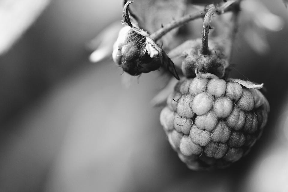 autumn berries.jpg