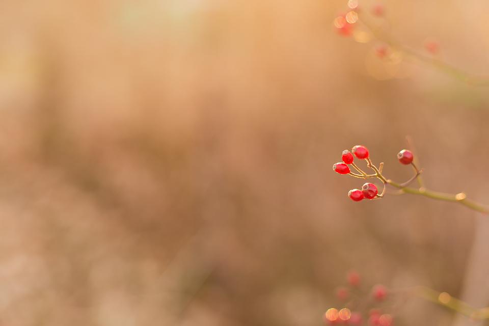 Winter berries Wakefield RI fine art photographer.jpg
